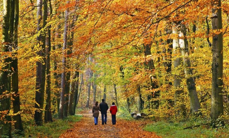 Fall-Hiking-800x482.jpg